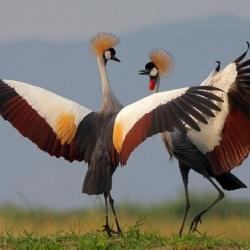 birdsdance